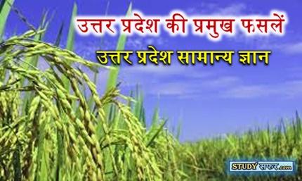 Uttar Pradesh ki Pramukh Fasal