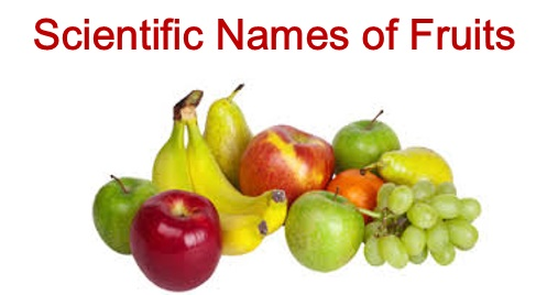 List of Scientific Names of Fruits || For RRB NTPC Exams
