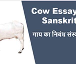 Gay ka Nibandh Sanskrit Mein || For Class 8th
