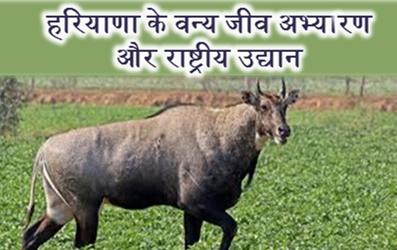 National Park in Haryana